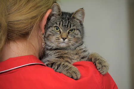 Tabby cat on the shoulder of the girl Stock Photo - 23225087