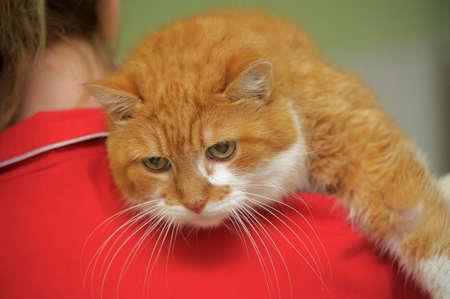 large cat Stock Photo - 23225090