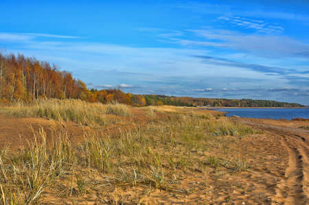 gusty: yellow grass on the beach