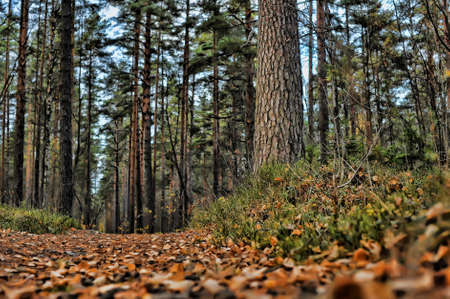 Autumn path in the park photo