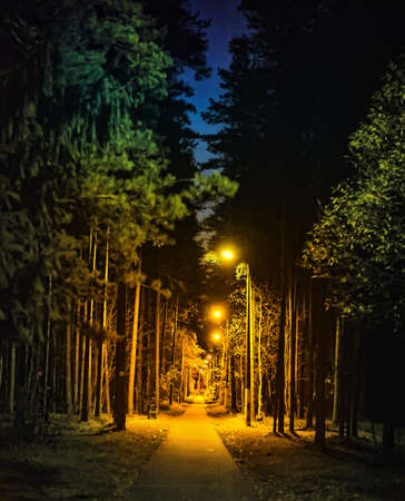 night alley in the park photo