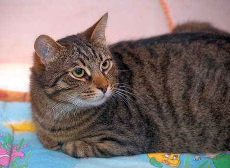 young and beautiful tabby cat photo