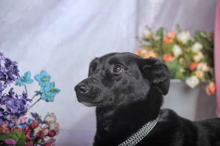 Elegant black dog with flowers photo