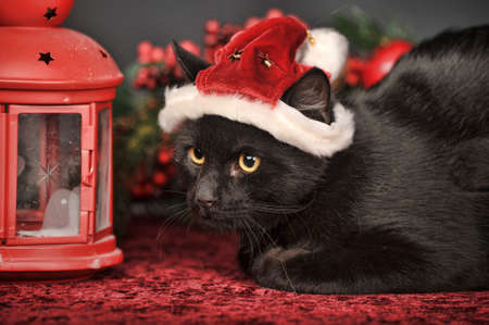 Black cat in red Christmas hat. photo