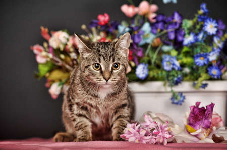 tabby cat and flowers in the studio photo