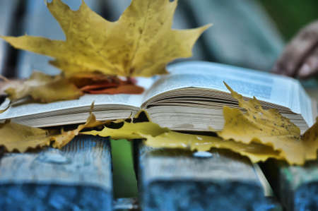 Book and autumn leaves photo