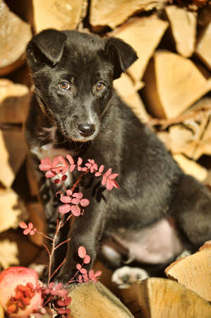 Half-breed puppy in a brown collar photo