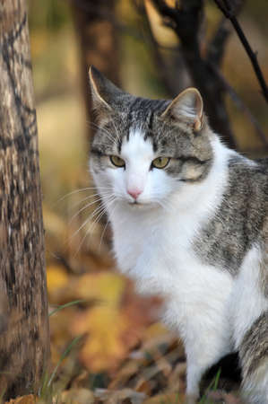 Cat on nature autumn day photo
