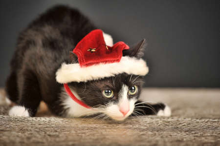 Beautiful cat in a Christmas cap  Stock Photo - 25780160