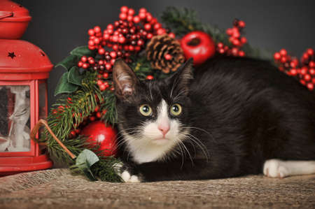 Black cat with Christmas  background photo