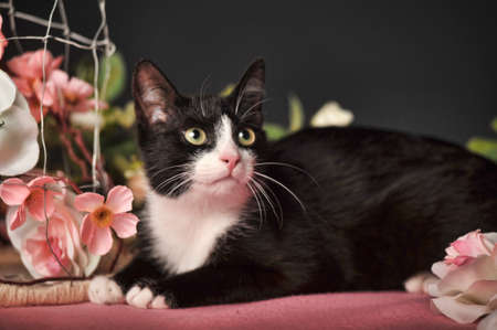 black and white cat with flowers roses photo
