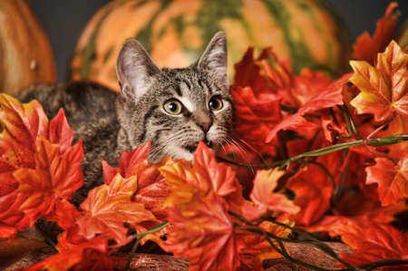 Beautiful young tabby cat autumn photo