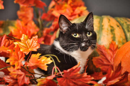 autumn cat photo