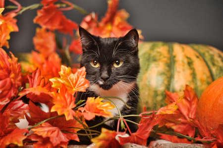 秋の猫 写真素材