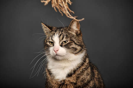 Big beautiful cat portrait photo