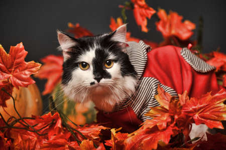 willow fruit basket: A pretty little calico kitten sits between pumpkins and autumn leaves  Stock Photo