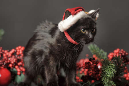 Cat in Christmas hat photo