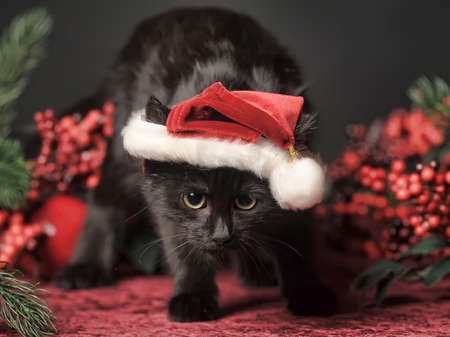 Cat in Christmas hat Stock Photo - 23938608