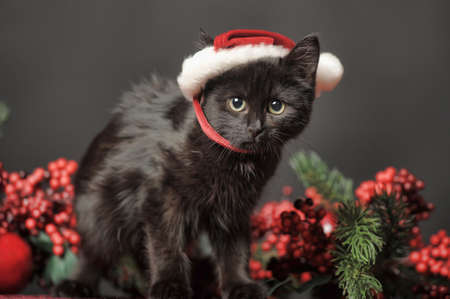Cat in Christmas hat Stock Photo - 23938607