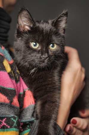 black kitten on her shoulder photo