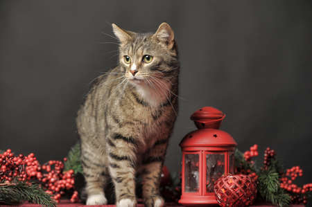 Cat in a Christmas photo