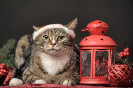 Cat in a Christmas santa hat and a flashlight, candle holder photo