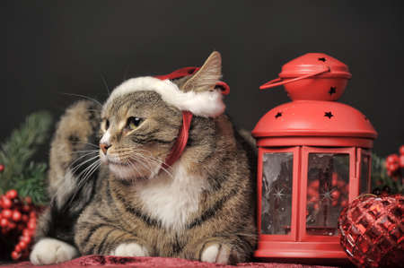 Cat in a Christmas santa hat and a flashlight, candle holder Stock Photo