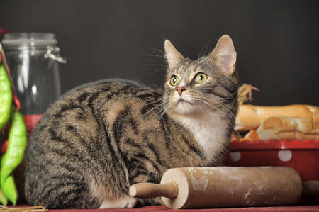 tabby cat on the kitchen table photo