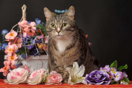 gatto tra i fiori in studio photo