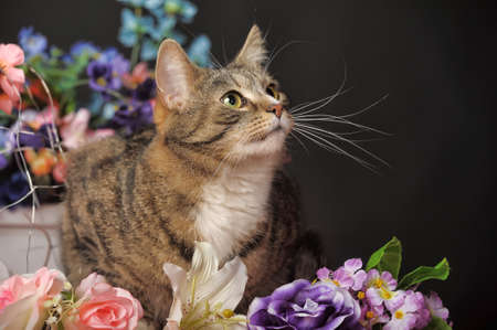 kat onder de bloemen studio Stockfoto