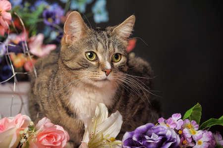 cat among the flowers studio photo