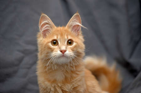 Portrait of a cute little red cat Stock Photo - 24137579