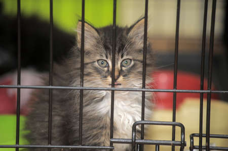 kitten in a cage photo