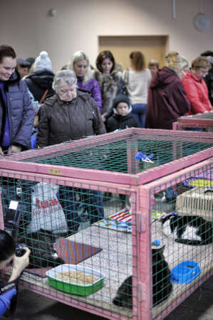 spay: The Way Home - show the distribution of animal shelter Rzhevka, St  Petersburg, Russia