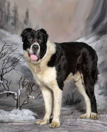 Central Asian Shepherd Dog on winter background  photo