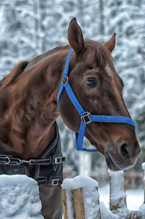 Winter horse in the paddock photo