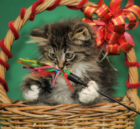 fluffy kitten in a wicker basket with a bow photo
