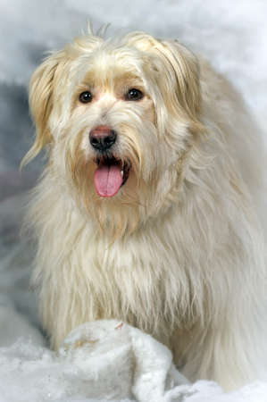 half blooded: Half-breed terrier in studio  Stock Photo