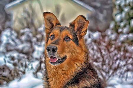 Dog on the winter photo
