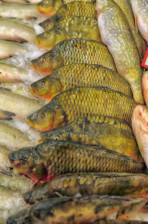 A selection of various fresh fish is being offered at an outdoor market  photo
