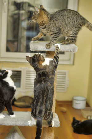paw smart: three cats playing