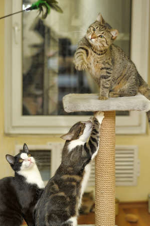 three cats playing photo