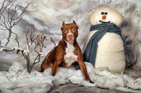 Brown Pit Bull photo