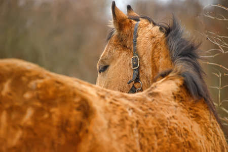 Horse portrait in winter time  photo