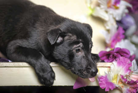 Black puppy purebred pooch on a floral background with orchids photo