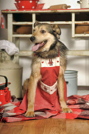 house trained: Dog in the kitchen