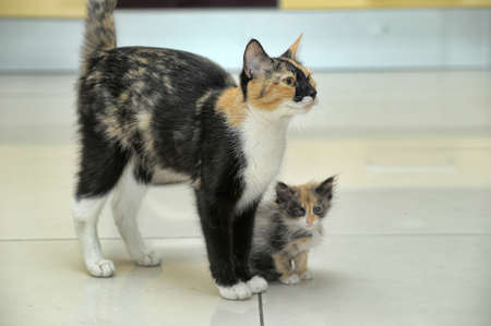 Tricolor cat with a kitten. photo