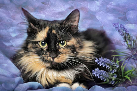 calico whiskers: Tortie and white cat on a blue background with flowers