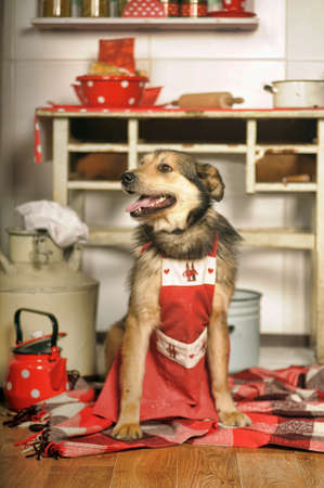 metis: Dog chef in the kitchen