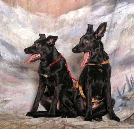 Two puppies pooch winter background  photo